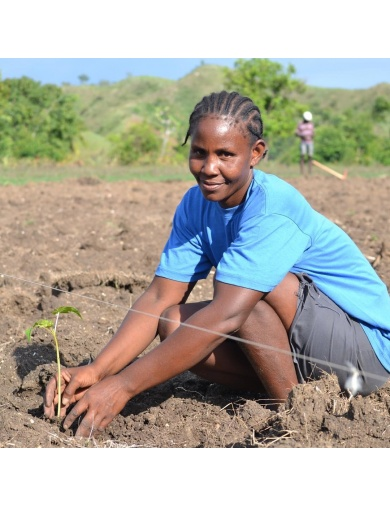 Huile de ricin noire d'Haïti-Mangue, Papaye Et Noix De Coco Bio-60ml-by ayizana - haiti